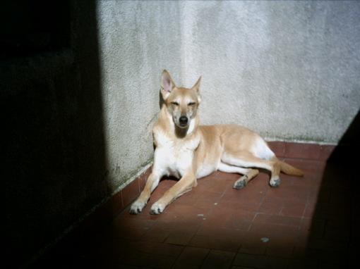Perra nefasta durmiendo después de fumarse un Cani Ibagaza